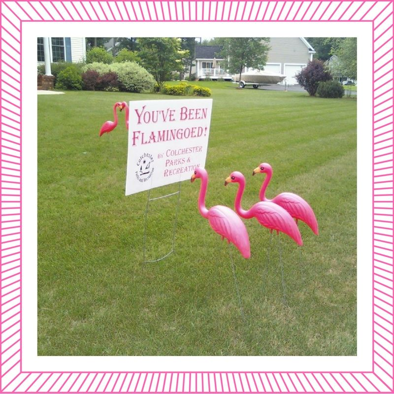 Flamingos [with frame]